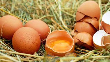Recettes de cuisine avec des œufs sur Duracuire !